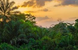 7.000 loài thực vật tại châu Phi có nguy cơ tuyệt chủng