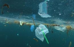Canada: TP Vancouver cấm sử dụng ống hút nhựa và túi nylon từ năm 2020
