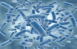 """Phát triển loại vi khuẩn chỉ """"ăn"""" khí CO2"""