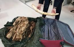 Phát hiện hành khách mang ngà voi, trầm hương từ Thái Lan về Việt Nam