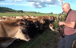 Khi động vật biết cảm nhạc