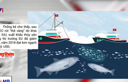 Việt Nam nghiêm túc thực hiện khuyến nghị của EC, hướng tới gỡ thẻ vàng thủy sản