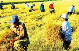 Định hướng an ninh lương thực trong tình hình mới