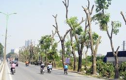 Di chuyển, chặt hạ 85 cây xanh thi công đường vành đai 2