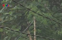 Nhiều hộ dân ở Phú Thọ hàng chục năm không có điện lưới