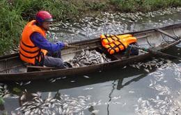 Cá chết trắng hồ giữa trung tâm TP Đông Hà