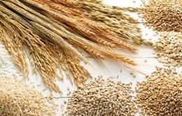 FAO: Giá lương thực thế giới tăng lần đầu tiên trong 5 tháng