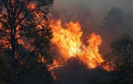 Cháy rừng hoành hành tại Australia