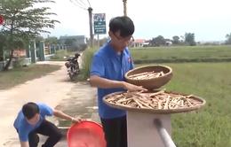 Quảng Nam: Giải pháp ống hút một lần