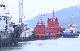 Phó thủ tướng Trịnh Đình Dũng chỉ đạo ứng phó bão số 6 tại Bình Định
