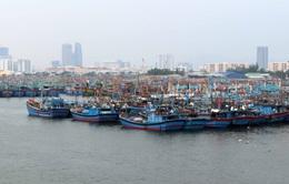 Đà Nẵng: Hơn 1.600 tàu, thuyền đã vào bờ neo đậu an toàn