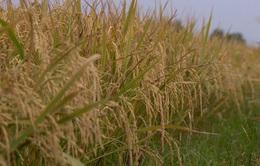 Phát triển hợp tác xã nông nghiệp ứng phó biến đổi khí hậu