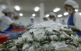 Tôm xuất khẩu sang Singapore liên tục giảm