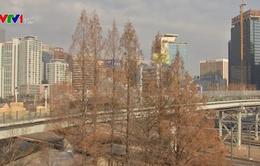 Hàn Quốc xây cầu vượt đi bộ nối chợ Namdaemun và ga Seoul