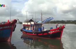 Quảng Ngãi: Chậm lắp đặt thiết bị giám sát hành trình cho tàu cá