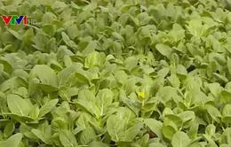 Singapore đứng đầu thế giới về an ninh lương thực