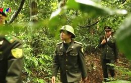 Tìm giải pháp bảo vệ rừng đặc dụng, rừng phòng hộ