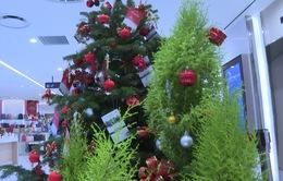Xu hướng chơi thông thật dịp lễ Noel 2019