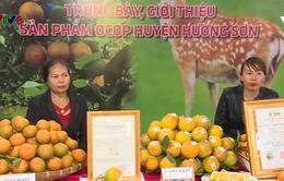 Hà Tĩnh: Khai mạc lễ hội cam và sản phẩm nông sản