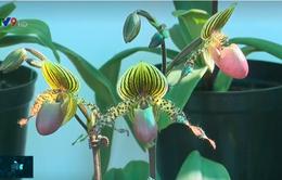 Nhiều giống lan độc lạ tại Triển lãm hoa, cây cảnh quốc tế