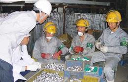 Hàn Quốc miễn xử phạt lao động cư trú bất hợp pháp