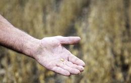 Nông sản đồng loạt tăng giá