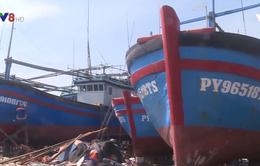Ngư dân khai thác cá ngừ vào vụ mới gặp nhiều khó khăn