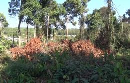 Điều tra vụ chặt phá rừng tại Khu bảo tồn thiên nhiên văn hóa Đồng Nai