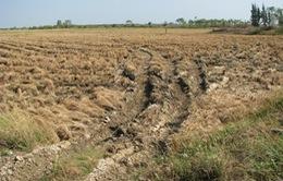 Bạc Liêu thành lập Ban Phòng chống hạn mặn tại các địa phương