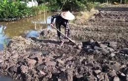Cà Mau đối mặt nguy cơ thiếu nước vì hạn mặn