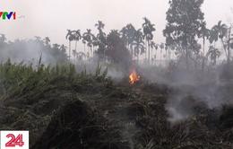 Cháy rừng thiêu rụi diện tích hơn 1,6 triệu ha đất rừng tại Indonesia