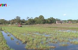 Thừa Thiên - Huế sáp nhập nhiều xã