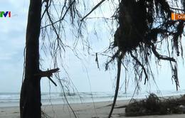 Sạt lở bất thường ở bãi biển Mỹ Khê