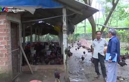 Quảng Nam: Cựu chiến binh xóa đói giảm nghèo hiệu quả