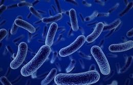 Trò chuyện cùng Dr.ANH: Vai trò của lợi khuẩn Bacillus với sức khỏe con người