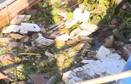 Phấn đấu 100% các khu du lịch không dùng sản phẩm nhựa dùng một lần