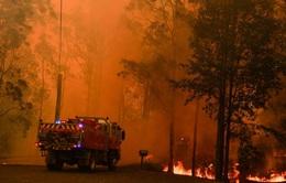 Gần nửa tỷ động vật bị chết trong cháy rừng ở Australia