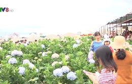 Du lịch Lâm Đồng cán mốc 7 triệu lượt khách