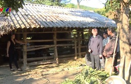 Chủ động chống rét cho gia súc ở vùng cao