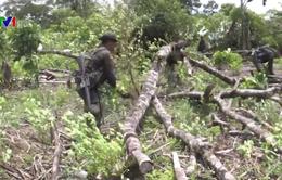 Colombia xóa sổ hơn 81.000ha cây coca