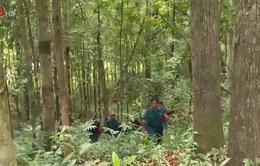 Đưa gần 28ha rừng vào diện quy hoạch rừng phòng hộ tại Quế Sơn
