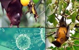 Cảnh báo nguy cơ virus Nipah trở thành dịch bệnh nghiêm trọng