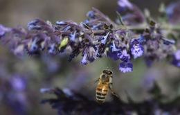 Ong mật cũng có thể… làm toán