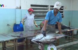 Tàu cá câu được 122 con cá ngừ đại dương
