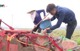 Cơ giới hóa đồng bộ trong gieo trồng lạc