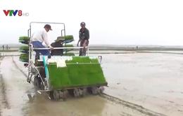 Bước đột phá về lúa sạch chất lượng ở Quảng Trị