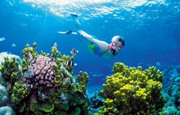 Florida cấm kem chống nắng để bảo vệ rặng san hô