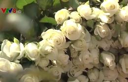 """Ngày Lễ Tình nhân, giá hoa hồng Đà Lạt tăng """"chóng mặt"""""""
