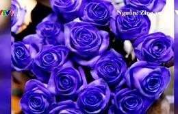 """Hoa hồng độc lạ tiền triệu """"hút"""" khách dịp Valentine"""