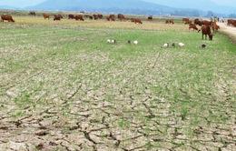 Tây Nguyên bắt đầu thiếu nước nghiêm trọng khi vào mùa khô 2019